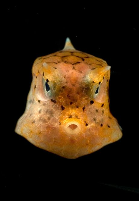 http://www.equator.ru/images/2007-10_boxfish.jpg